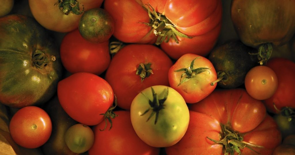 Tomatomania 2020: Where to buy tomato seedlings in L.A.