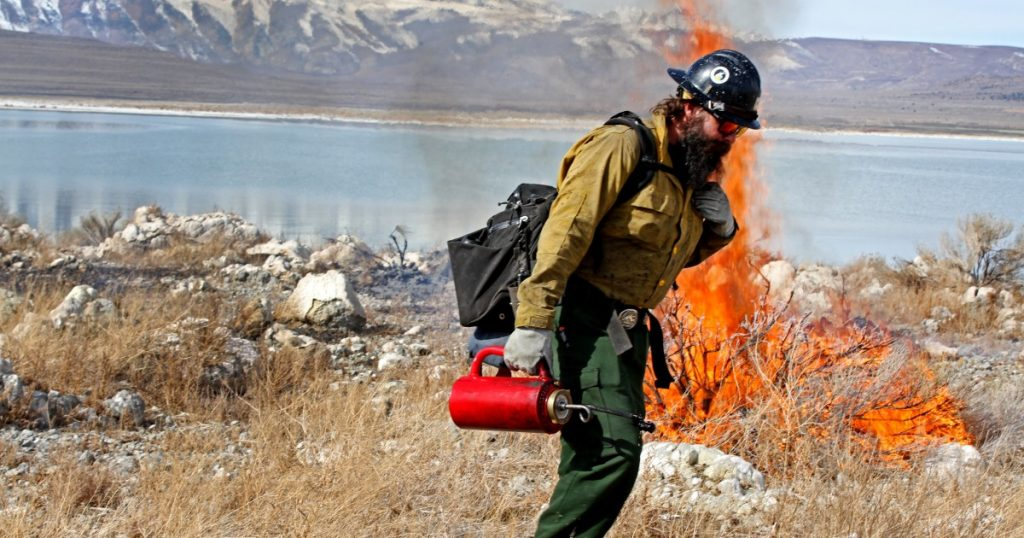 Feds burn island weeds at Mono Lake to help birds feather their nests