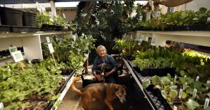A happy little miracle in dark times: The plant nursery business is booming