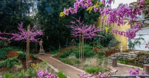 L.A.'s beloved native plant garden tour canceled: But there's (virtual) hope