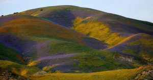 Approval of oil well at Carrizo Plain monument stirs outrage