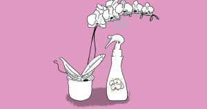 Orchid care: Gardening tips from a Huntington expert