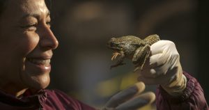 Rescues underway for rare species marooned by wildfire