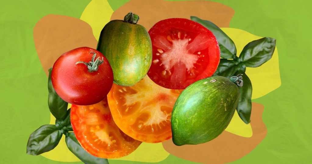 Tomatomania is back with hundreds of tomato choices