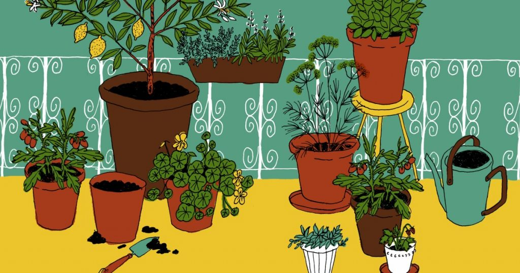 Container gardening: How to grow food in pots on a balcony