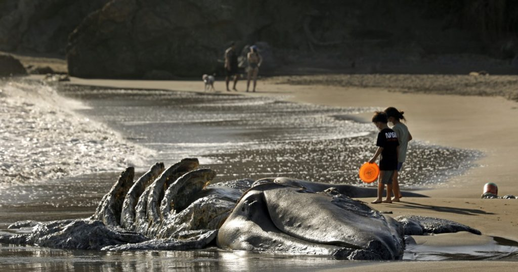 Three whales wash up dead near San Francisco, 8 in 5 weeks